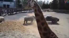 5 لحظه ترسناک حمله حیوانات به انسان