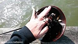 بازی با خرچنگ وای چه عجیب وشگفت انگیز