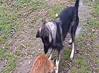 جنگ گربه با سگ