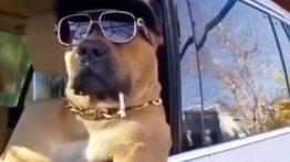 سگ لاکچری و پولدار