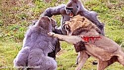 مبارزه ی عجیب وحیرت انگیز حیوانات وحشی