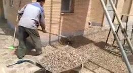 ملخ ,حمله حیوانات