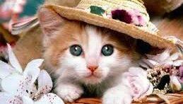 گربه ی بامزه