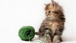 بازی گربه با کاموا