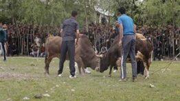 جنگ حیوانات اهلی وحشی و ترسناک
