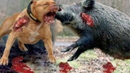 جنگ حیوانات وحشی و درنده در حیات وحش