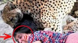 حیواناتی وحشی که به خانه ی انسان ها سرزده حمله کردند