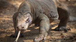 خطرناک ترین حیوانات جهان