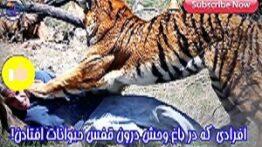 صحنه های وحشتناک افتادن ادم ها داخل قفس حیوانات