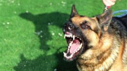 وقتی سگها با حیوانات وحشی رودررو بشوند