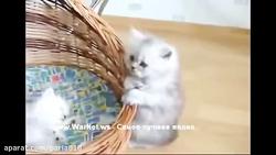 گربه سخنگو ناناس