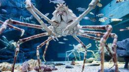 بازار حیوانات دریایی ترسناک کره درگیری با هشت پای غول پیکر!!