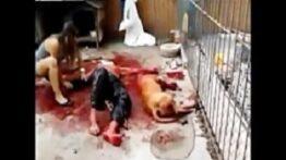 حمله خونین سگ به انسان