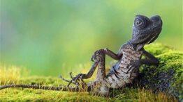 رفتارهای حیرت انگیز و عجیب حیوانات