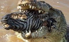 لم نمادهای حیات وحش – شکارچیان آفریقا