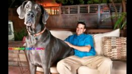 10 تا از بزرگترین حیوانات خانگی که باور نمی کنید واقعی باشند