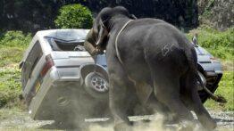 حمله حیوانات به انسان (6)