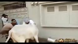 حمله حیوانات درنده به انسان،