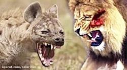 هیجان انگیزترین حمله و جنگ حیوانات