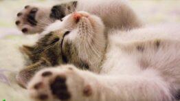 جنگ گربه خوشگل خانگی با گربه ها