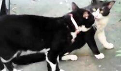 نبرد گربه ها گربه های خشمگین حیوانات