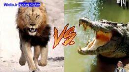 14 نبرد هیجانی حیوانات وحشی