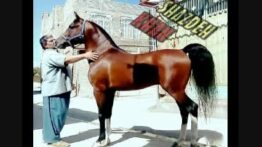 اسب شازده خان