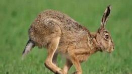 سریع ترین حیوانات روی کره زمین مستند حیوانات,شکار,حیات وحش,راز بقا