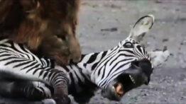 شکار گوزن و خر