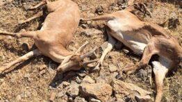جنگ سنگین و سخت بین حیوانات وحشی