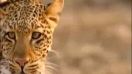 فیلم مستند دیدنی جنگ و جدال حیوانات حیات وحش افریقا