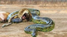 دیوانه ترین حملات شیر در مقابل پیتون ببر گوریل فیل سگ وحشی تمساح بوفالو