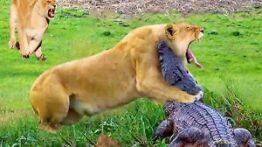 مستند حیات وحش حمله به حیوانات وحشی