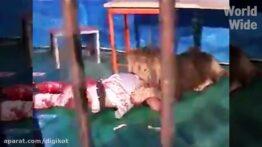 ثبت لحظات وحشتناک از حمله حیوانات به انسان ها
