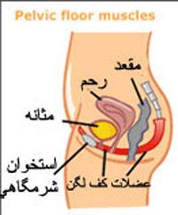افزایش لذت جنسی با تقویت عضلات کف لگن