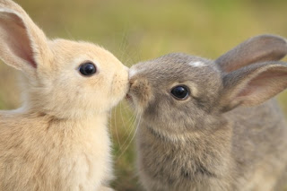 funny_animals_kiss