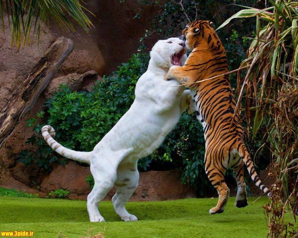 تصاویر و عکس های زیبا و دیدنی از حیوانات وحشی و اهلی 2015 جدید